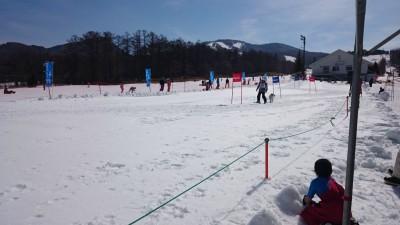第5回スラロームDOGスキー大会