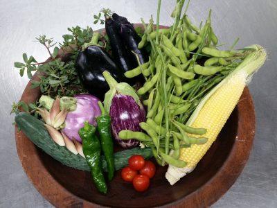夏休みの恒例イベント「食育ツアー 収穫体験」やってますよ!