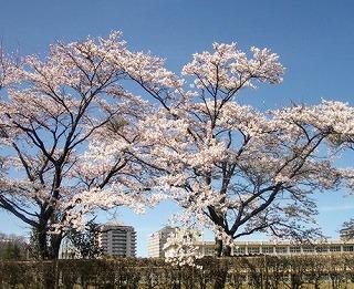 photo_nasu_jhs01_l_2 (1)
