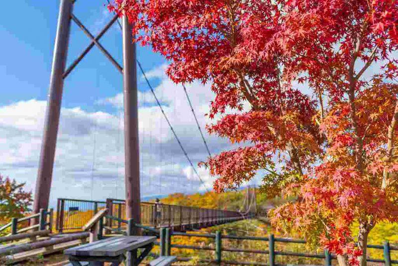 那須高原を彩る紅葉♪