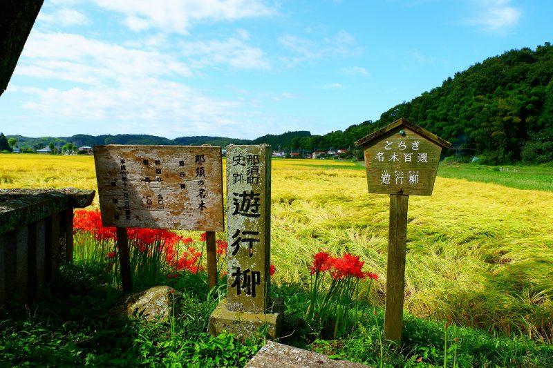 田舎ならではの風景を・・・